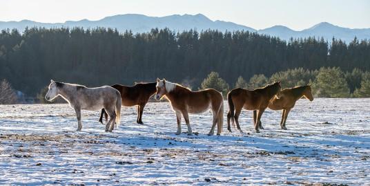 horses_mountain